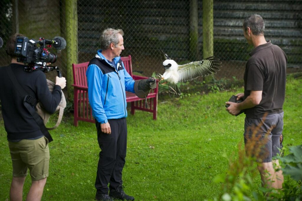 Pedro is the latest addition to the Cumberland Bird of Prey Centre's display team